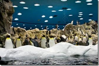 Лоро_Парк_Пингвинарий