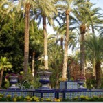 Пальмовые леса Испании