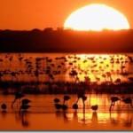 Парк Доньяна — природные богатства Андалусии
