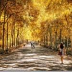 Парк Марии Луизы — возврат в Золотой век Севильи