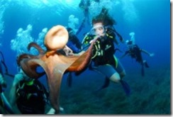 Diving_Ibiza